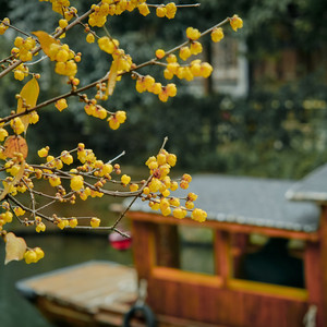 乌镇游记图文-重启后的江南水乡诗意乌镇,等你来过个不一样的惬意假期