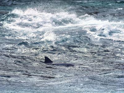 史蒂芬港觀海豚
