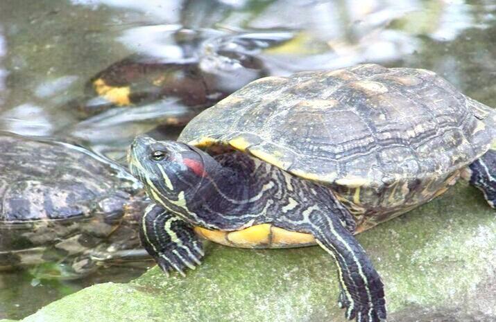 마닐라 동물원 및 식물원