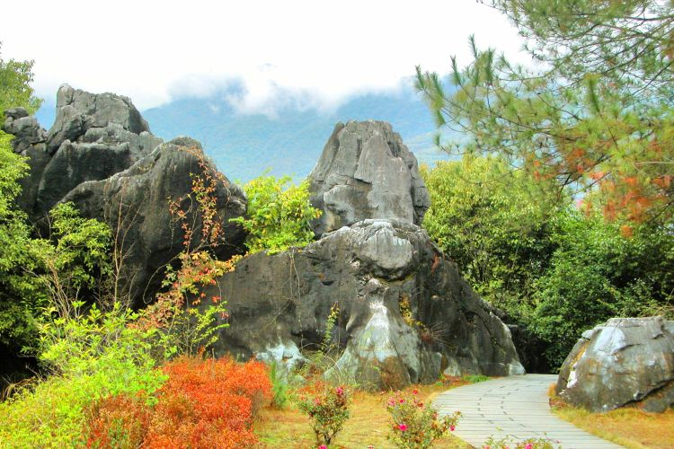 Fujian Linyin Stone Forest