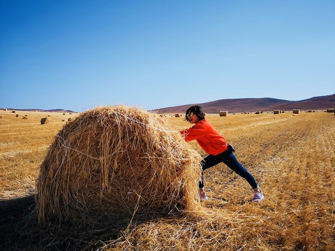 呼伦贝尔大草原 一万个人眼中有一万种呼伦贝尔大草原的秋 – 呼伦贝尔游记攻略插图55