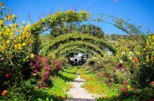 走访莫奈花园,感受大师的风采