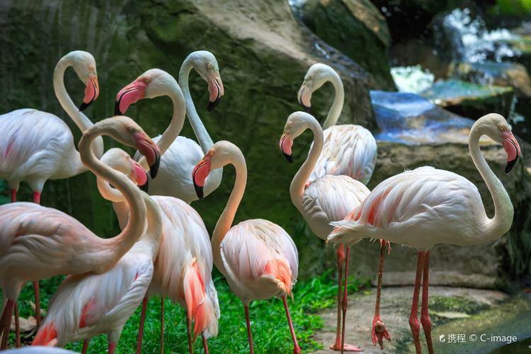 Bird Park3