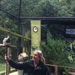 几维鸟和鸟类公园旅游景点攻略图