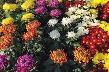 市场的花卉
