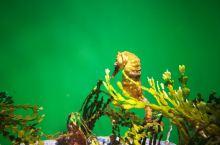 美丽之约~美丽海水族馆