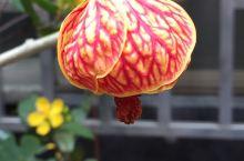 求助:在台南拍摄的不知道名称的花