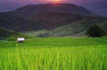美丽的大草原