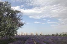 金昌市紫荆花和薰衣草广场