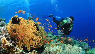 大堡礁潜水