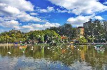 #元旦去哪玩 冬季来翠湖和红嘴鸥相遇