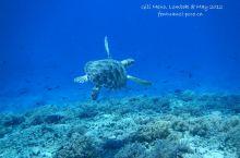吉丽岛坐玻璃底船浮潜看海龟