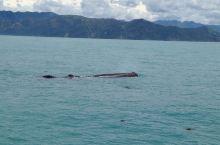 观鲸之旅 这段火车线路,沿途的风景非常美,尤其是最后靠近凯库拉这段,绝对值。抵达后才发现观鲸公司跟火