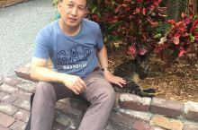 海明威家的猫