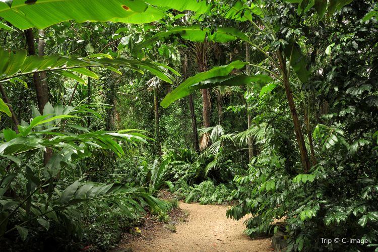 凱恩斯植物園1