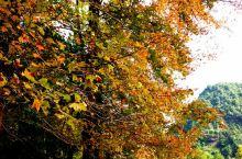 广西德保红叶森林公园