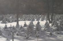 巴里坤雪山