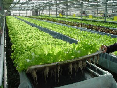 Harbin Northern Modern City Agriculture Model Garden