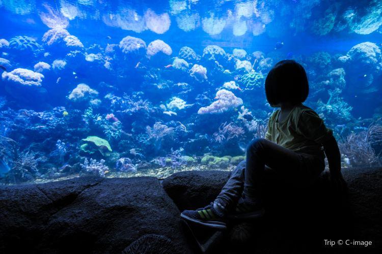 青島海底世界2
