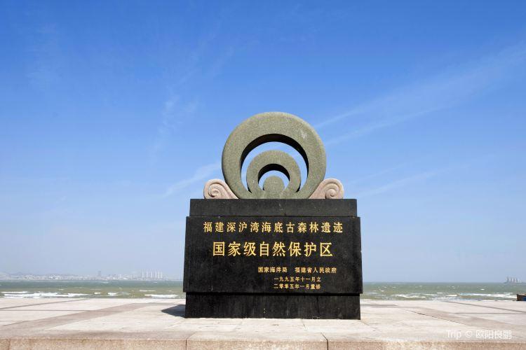 Shenhuwan Submarine Ancient Forest Relics Nature Reserve3