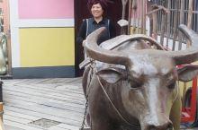 桃花坞的老水牛