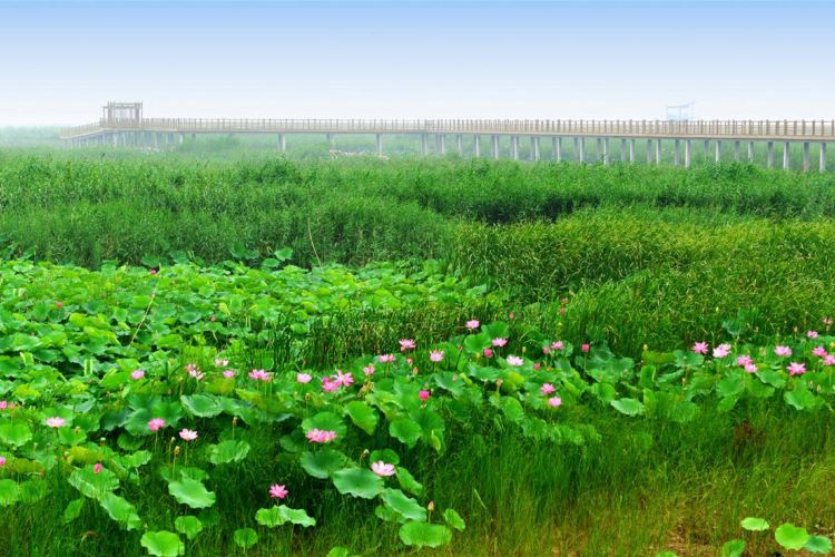 Weishan Lake National Wetland Scenic Area3