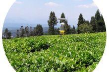 最新公示!四川省十大最美茶乡初评出炉!来看看有没有你家乡!