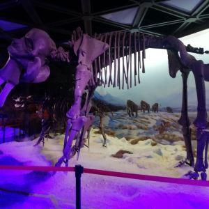恐龙博物馆旅游景点攻略图