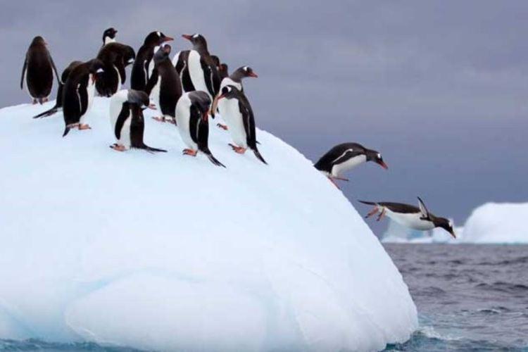 南寧融晟極地海洋世界1