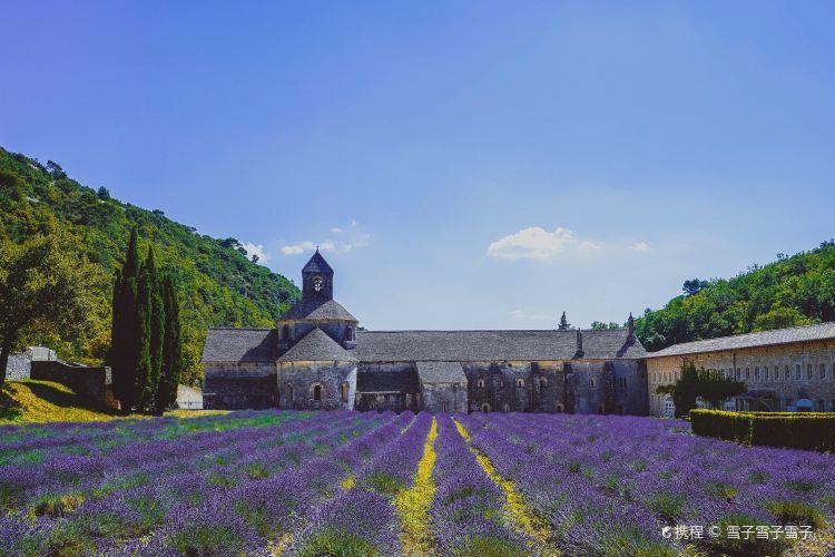 Abbaye Notre-Dame de Senanque1