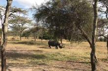 野生黑犀牛