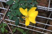 雨天的花儿