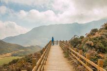 春天看杜鹃花海,秋季赏纯粹的坡上草原美景,就在贵州大海子花海
