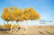 大漠胡杨,是一场命运抗争的印记