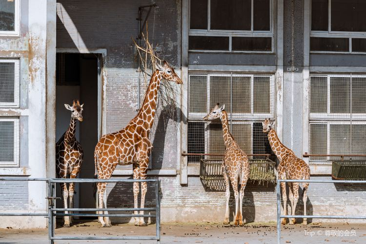 上海動物園2