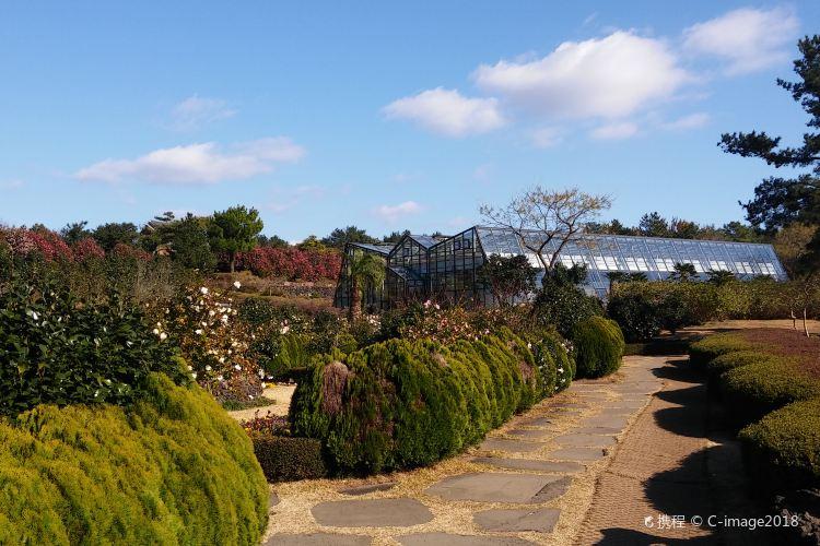 Camellia Hill1