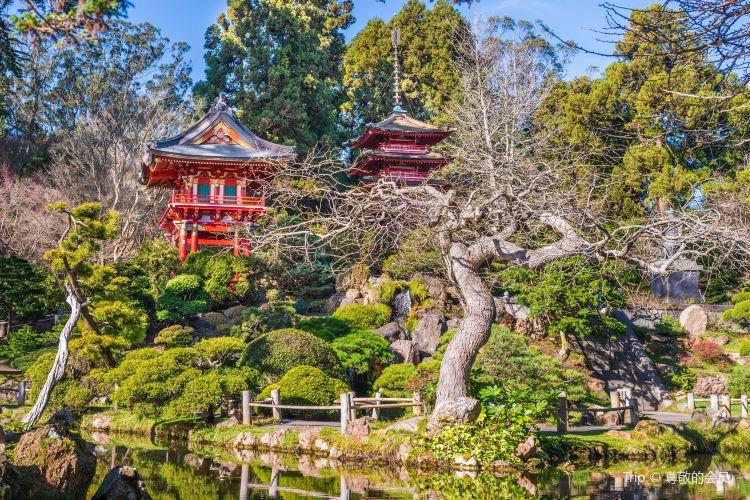 Japanese Tea Garden2