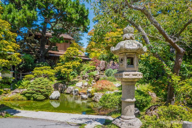 Japanese Tea Garden1