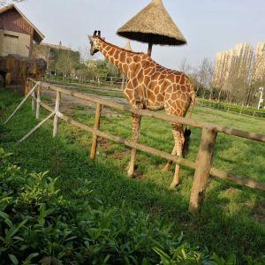 南昌动物园旅游景点攻略图