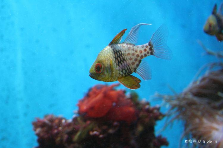Aquarium of Niagara4