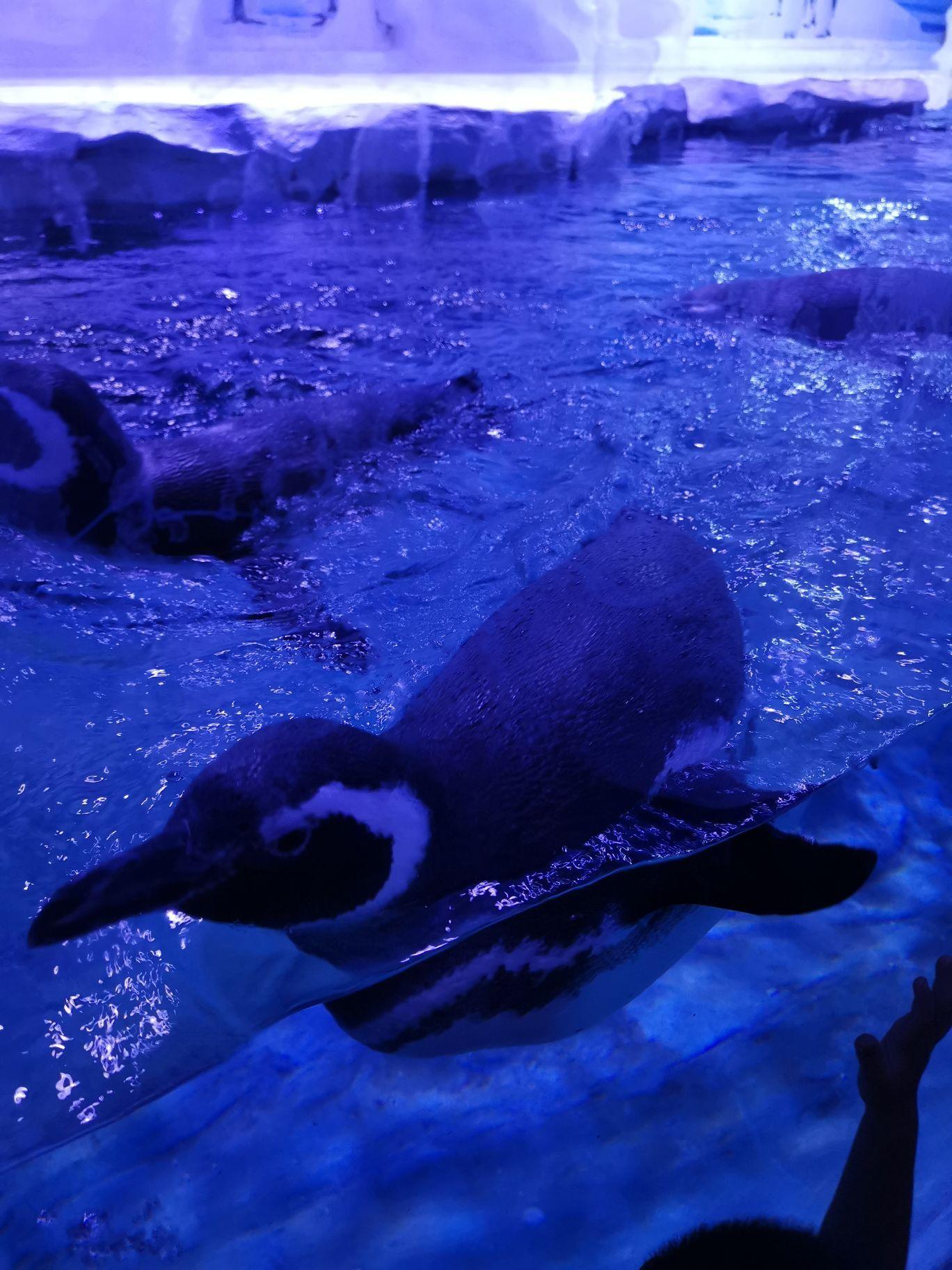 北海海底世界好玩_2019北海海底世界-旅游攻略-门票-地址-问答-游记点评,北海旅游 ...