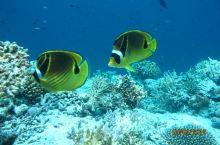 SPA服务还行,但技术一般,就是风景不错,脚下的海中就是各色的小鱼,听着海浪轻轻拍打的声音,舒服!乒