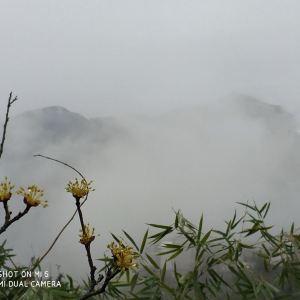 坡山村旅游景点攻略图