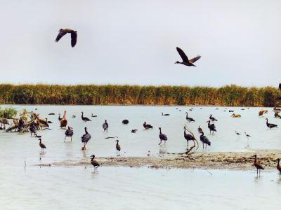 朱吉鳥類保護區
