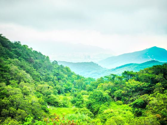 Huanghua Mountain Forest Park