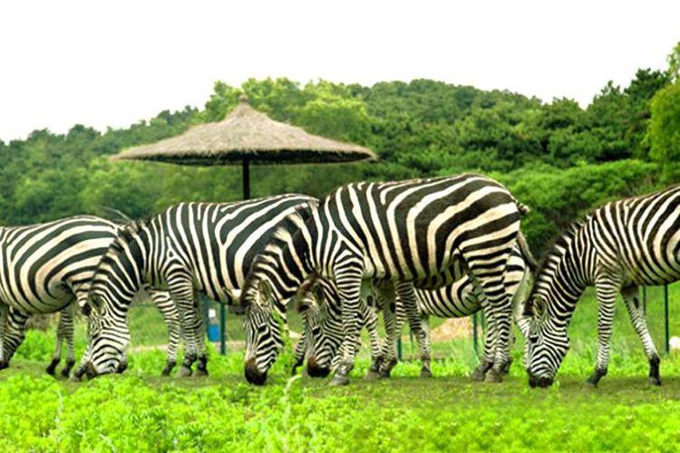 선양 야생동물원