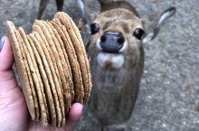 🦌 Nara, Japan 🇯🇵