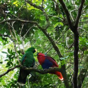 塔龙加动物园旅游景点攻略图