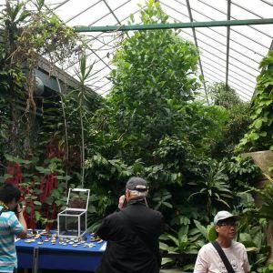 维多利亚蝴蝶园旅游景点攻略图
