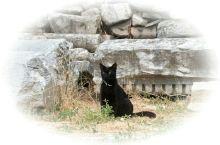 要做一只幸福的猫,配着数千年的塞克变老